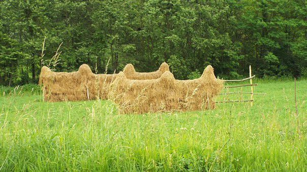 Capita, Fan, Grass, Summer, Green, Mowing, Romania