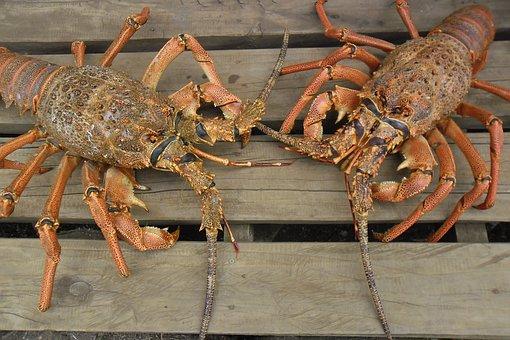 Island, Lobster, Robinson Crusoe