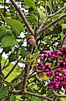 Nature, Snail, Reptile, Round Worm House, Lilac Bush