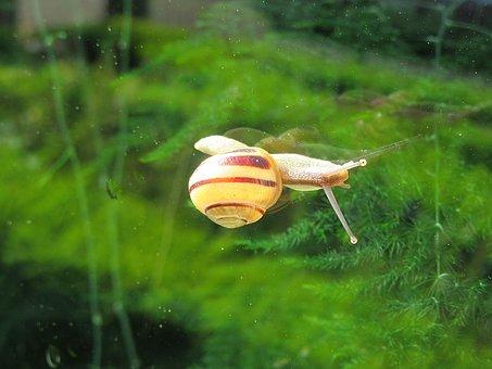 Snail, Window, Crawling, Snails, Cochlea, Slowly