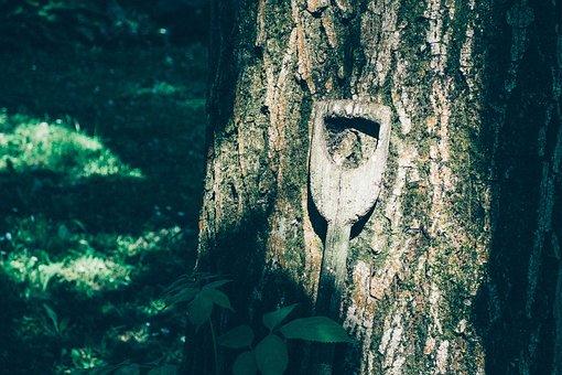 Tree, Nature, Spade Handle, Handle, Wood, Log, Old Tree