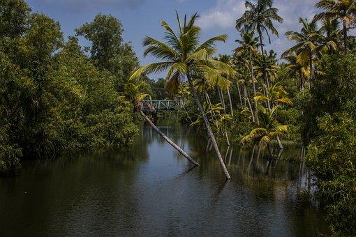 Palm Trees, Backwater, Sea, Travel, Water, Kerala