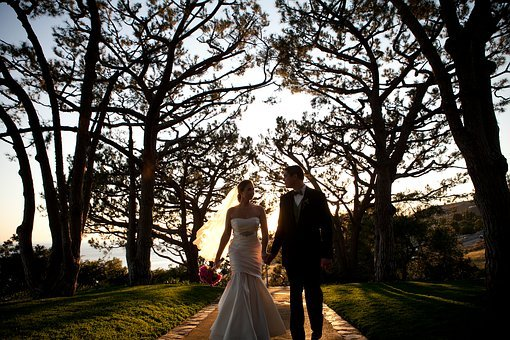 Couple, Wedding Day, Trees, Love, Wedding, Romance