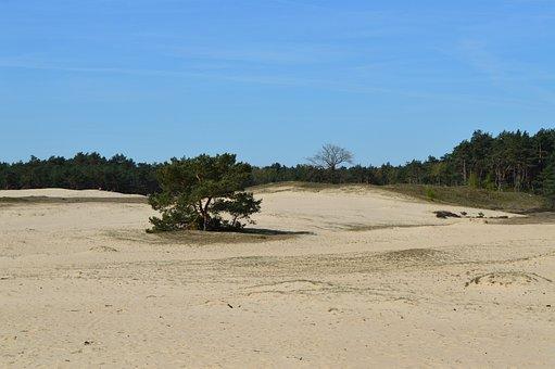 Otterlo, Veluwe, Sand Dunes, Netherlands