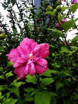 Flower, Rain, School