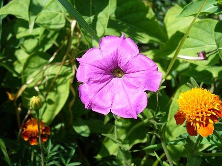 Flower, Tobacco, Saffron