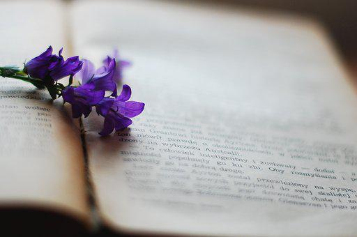 Book, Flower, Violet, Old Book, Yellowed Pages, Reading