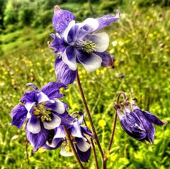 Flower, Orchid, Blossom, Bloom, Plant, Violet, Nature