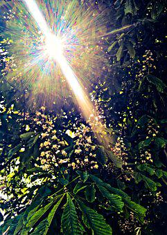 Nature, Chestnut, Tree, Spring, Chestnut Blossom