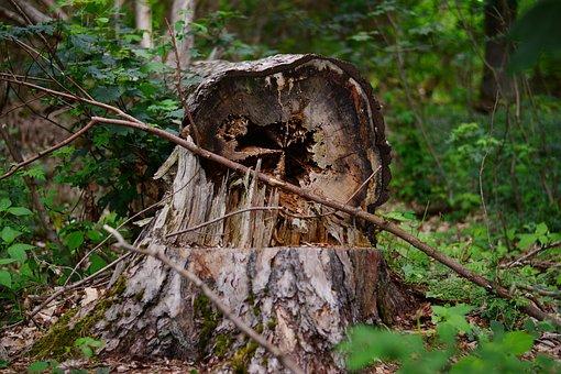 Tree, Tree Damage, Favor, Storm Damage, Destruction