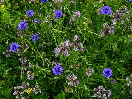 Meadow, Flower Meadow, Summer, Nature, Green