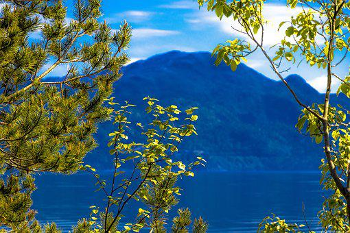 Forest, Tree, Foliage, Nature, Green, View, Mountains