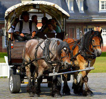 Horse Drawn Carriage, Drag, Livestock, Work Harness