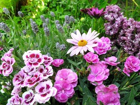 Flowers, Carnation, Marguerite, Lilac, Lavender, Plant