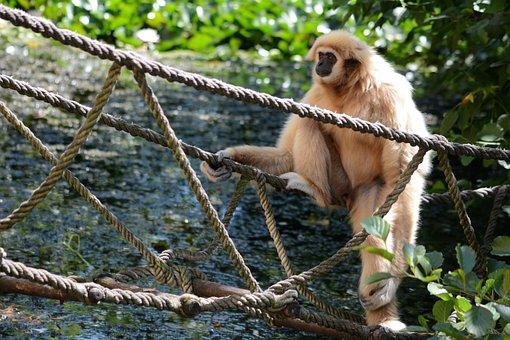 Monkey, Zoo, Rest, Sitting, Mammal, Zoological Garden
