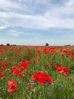 Sky, Poppies, Road, Nature, Landscape, Blue