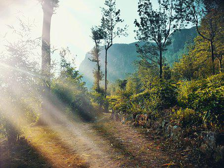 Nature, Sri Lanka, Village, Morning, Asia, Natural