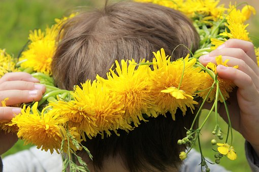 Dandelions, A Wreath Of Dandelions, Yellow Flowers