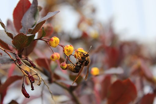 Wasp, Barberry, Insect, Flower, A Yellow Flower