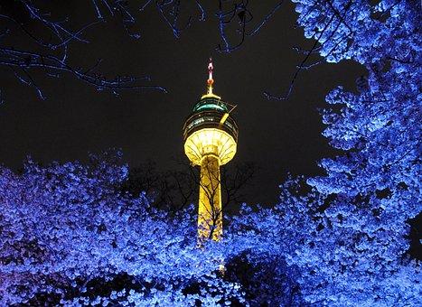 Tower, Beoc Flowers, Night View, Lights, Night, Light
