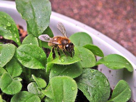 Bee, Wings, Bug, Flowers, Spring