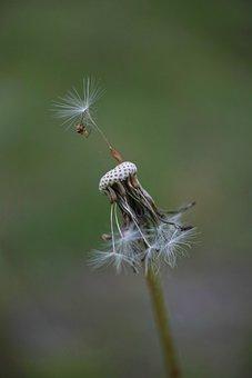 Flower, Dandelion, Garden, Spring, Plant, Macro, Summer