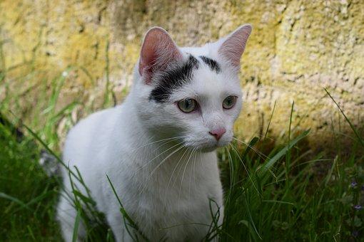 Cat, Animals, Domestic Cat, Cute Cat, Curious, Nature
