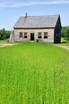 Flax, Field, Farm House, Agriculture, Meadow, Rural