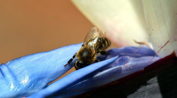 Bee, Blossom, Bloom, Insect, Flower, Macro, Close