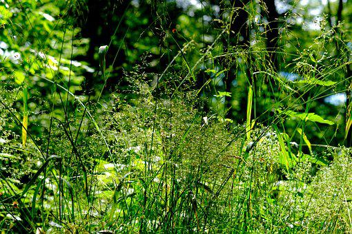 Grasses, Forest, Nature, Meadow, Green, Landscape
