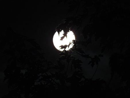 Spooky, Moonlight, Halloween, Moon, Backround