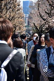 Cherry Tree, Japan, Tokiyo, People, Mass