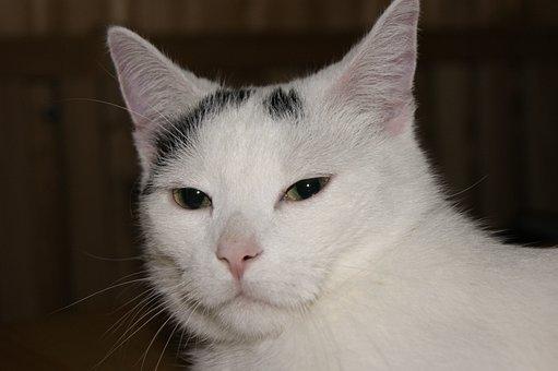 Cat, Domestic Cat, Cat Face, Cat's Eyes, Animal, Mieze
