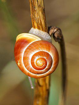 Snail, Tape Worm, Nature, Animal, Mollusk