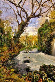 Tree, Waterfall, Landscape, Nature, Water, Green