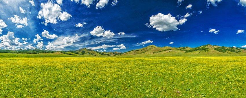 The Valley Of Flowers, Trollius Download, June