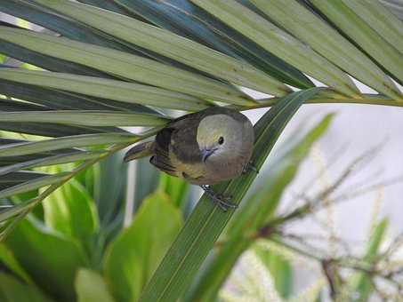Coconut Tree, Tanager, Bird, Birdie, Nature