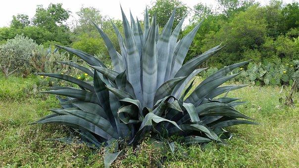 San Antonio, Botanical, Gardens, Nature, Flowers