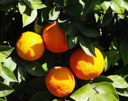 Oranges, Marrakech, Fruit, Citrus, Food, Vitamins