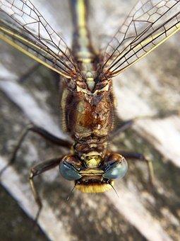 Macro, Dragonfly, Wings, Bug, Insect, Nature, Natural