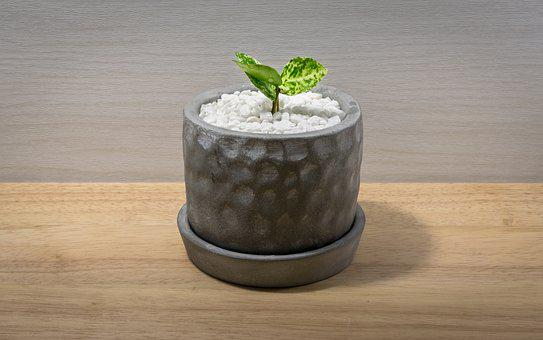 Mark Cutting Line, Potted Plant, Nature, Flower, Plants