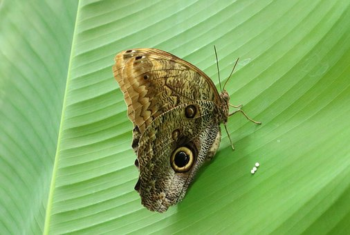 Butterfly, Nature, Insect, Close