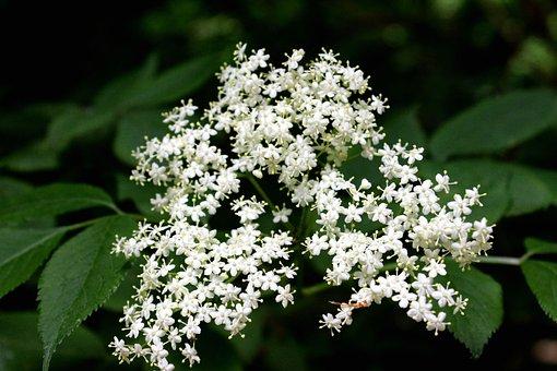 Flowers, Nature, Spring, Floral, Summer, Natural, Bloom