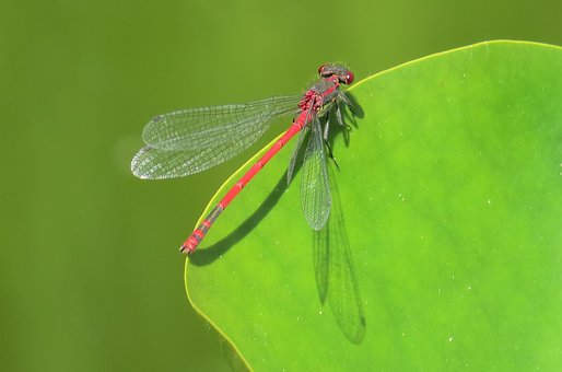 Dragonfly, Pond, Insect, Nature, Wildlife Photography