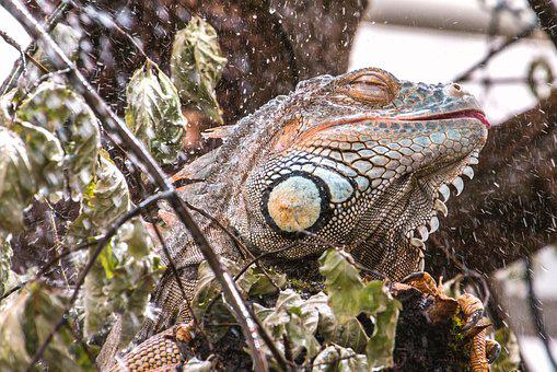 Lizard, Wet, Shower, Refresh, Drop Of Water, Cooling
