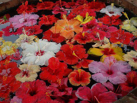 Flower Pond, Floating Flowers, Flower Decoration