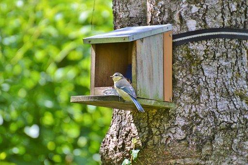 Tit, Blue Tit, Bird, Foraging, Animal, Garden