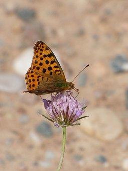 Butterfly, Butterfly Aranja, Wild Flower, Libar