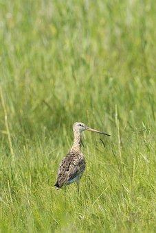 Bird, Off Russian Energy, Wetlands, Dollars Non Plains