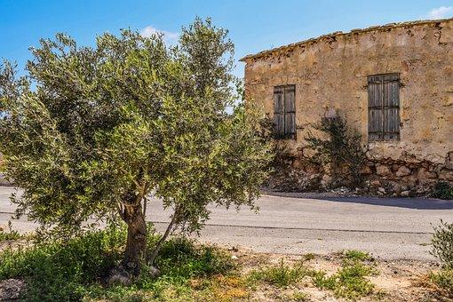 Olive Tree, Old House, Abandoned, Aged, Weathered